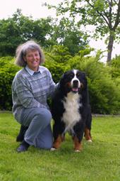 arbejde med hunde